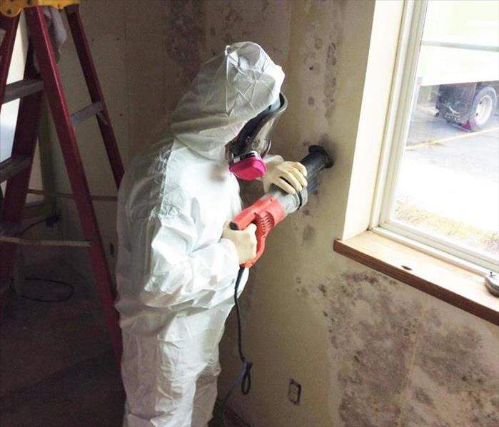 When Mold Invades a Business