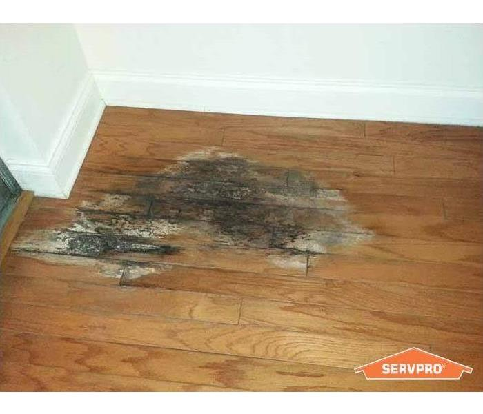 water damage on hardwood flooring